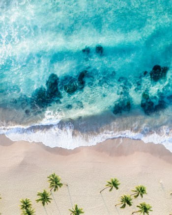 Palm Tree Turquoise Ocean Beach Aerial