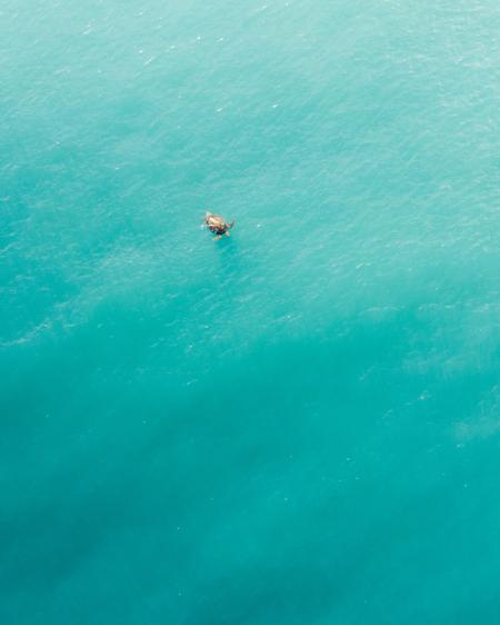 Aerial of Turtle Swimming in the Ocean