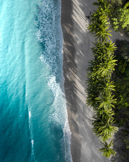 Tropical Palm Trees and Ocean Aerial