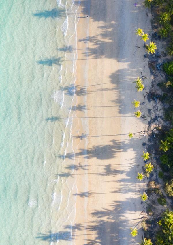 Palm Tree Beach Aerial Photography Print