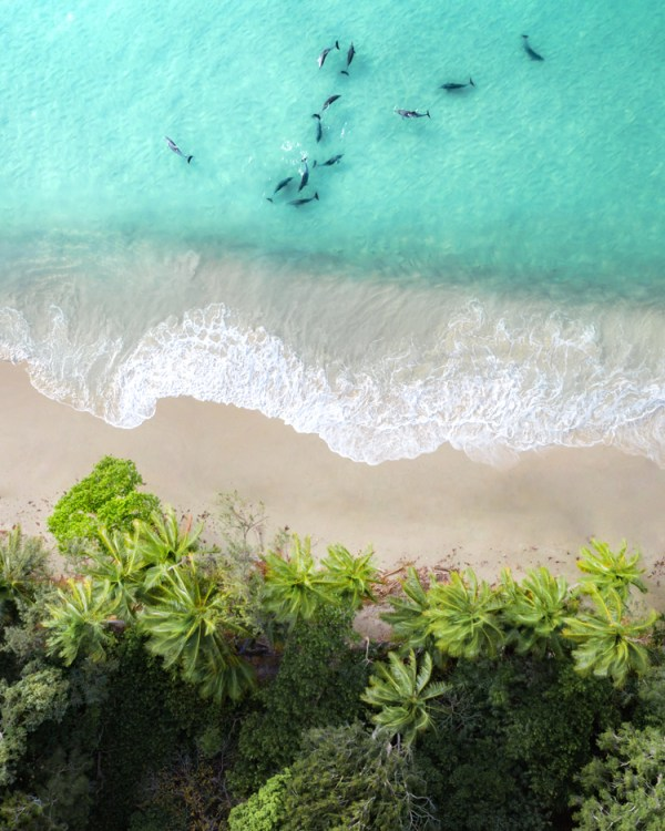 Aerial Of Dolphins And Palm Trees