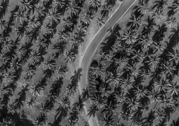 Black and White Palm Tree Print