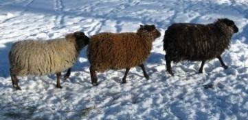 11842_3-lambsbrochure1.jpg