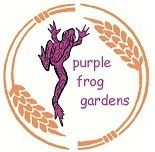 Purple-Frog-Logo.jpeg