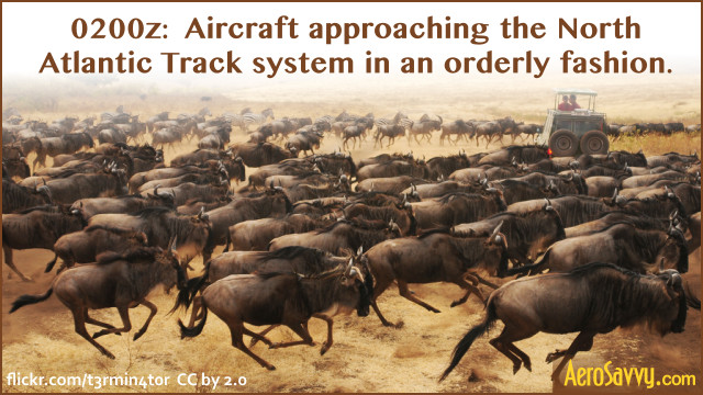Aircraft stampede to the tracks