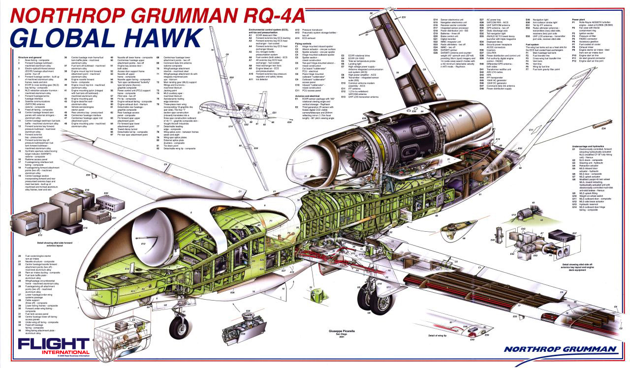 hight resolution of diagram of a hawk