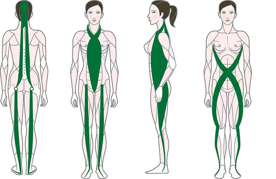 Четыре основных фасции нашего тела