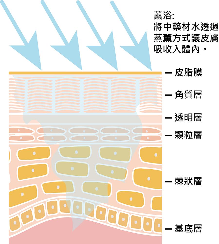 薰浴皮膚層吸收原理1