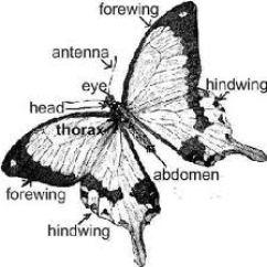 Butterfly Anatomy Diagram Kindergarten Flower Of   Aesthetichealingmindset's Blog