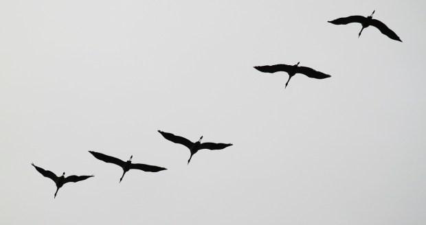 cranes-534922_1280
