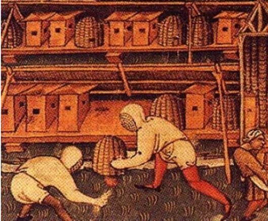 Wood hives and skeps in the same apiary, from the  Manuscrit enluminé par le Maître des Vitae Imperatorum (actif 1430 – 1450), miniatures qui illustrent le manuscrit du même nom de Suétone (Paris, B. N., ms. it. 131), 1431.