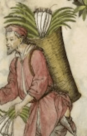 Medieval and Renaissance. Leeks. Accessed 12 November 2019. Tacuinum Sanitatis (BNF Latin 9333), 15th century