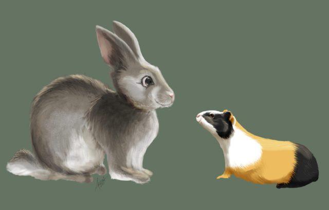 BFVH-Bunny-GPig-FINAL-DA