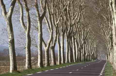 arbres_dalignement
