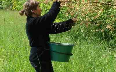 Journée d'échanges « Semer et planter local : un défi pour la biodiversité »