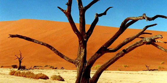 Namibia-dry-tree_564x282