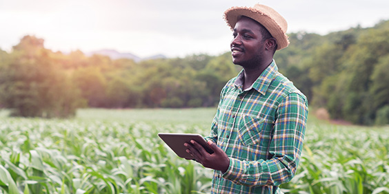 Ploughing into agriculture insurance