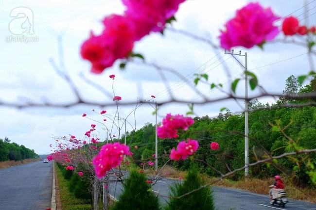 Ven Sài Gòn, có một con đường thơ mộng ngập tràn hoa giấy - Ảnh 11.