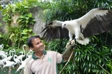 SAFARI WONDERLAND_-_COLOUR OF THE BIRDS SHOW