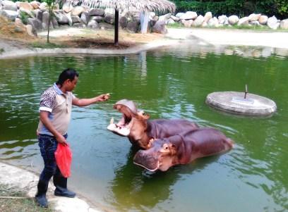 SAFARI WONDERLAND_-_HIPPO (2)
