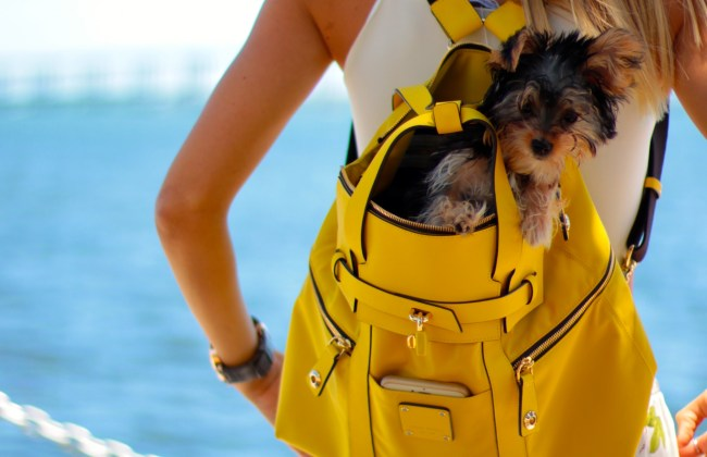 amanda tur from a fancy affair miami fashion and lifestyle blogger wearing floral pants and crop top with henri bendel jetsetter backpack in yellow to miami pier florida with teacup yorkie 4 months inside