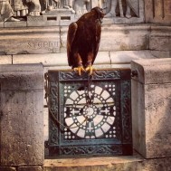 Poor eagle. Him and some kind of falcon were a photo op tourist attraction. Pretty amazing though.