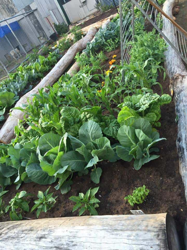 Building Garden Trellis Vegetables