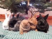 -Allison(Christmas tree and bunnies) 058 (1280x960)