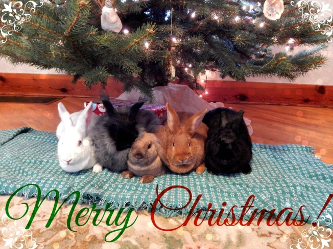 Merry Christmas from the Bunnies