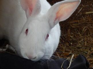 -Allison(Jinx & bunnies, room) 013 (1280x960)