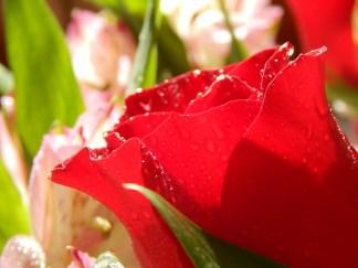 -Allison(rose photoshoot) 019 (1280x960)