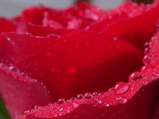 -Allison(rose photoshoot) 047 (1280x960)