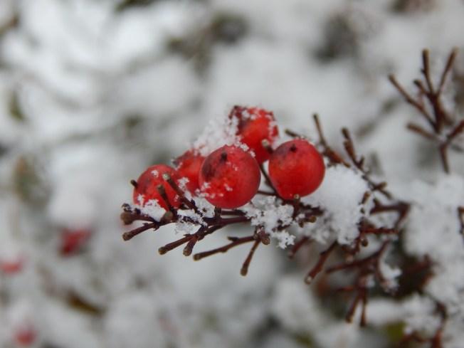 Allison(snow, bookmark) 042 (1280x960)