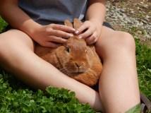 -Allison(birthday hike, bunnies) 191 (1280x960)