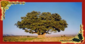 Photo-0231-300x155 L'ARGANIER DU BOU INAGHAN (l'arbre  des tués)   أركان ن بوي نغان أخبار آفيان