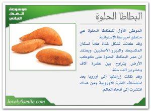 fo-032-300x220 البطاطا الحلوة منتدى أنوال