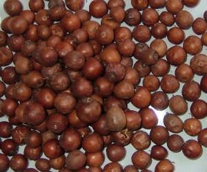 Nbeg-de-Boujaad1-300x250 أزكار أو النبق  فلاحة