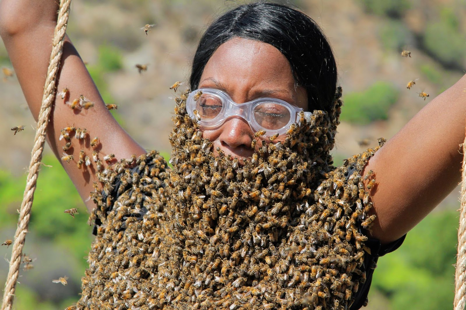 Fear Factor – Bees