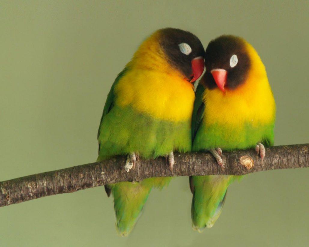 قصة العصافير و الرياح وحب الوطن قصص اطفال