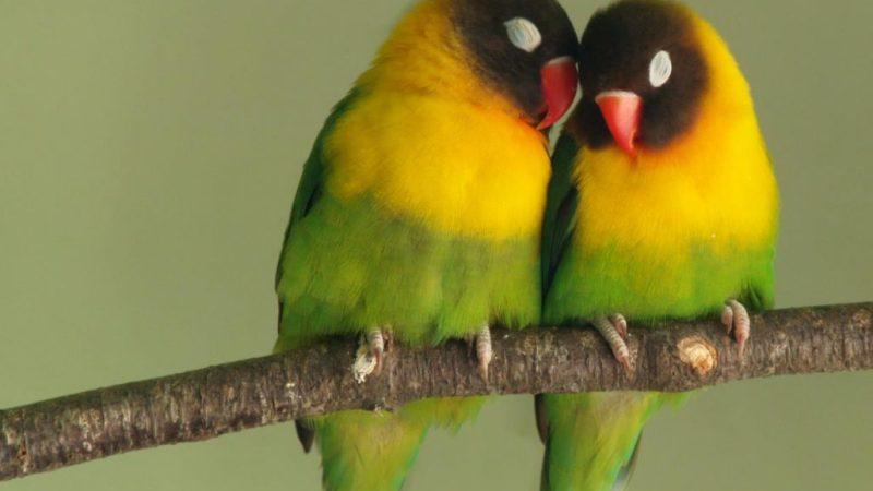 """قصة العصافير و الرياح وحب الوطن """"قصص اطفال"""" قصيرة مكتوبة"""