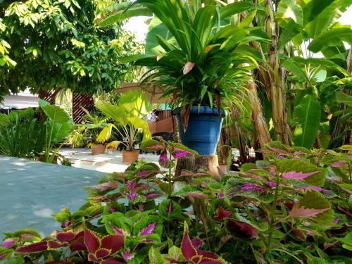 Island Vista Inn Ukulhas Maldives