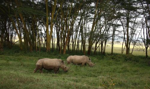tents in masai mara - sarova lion hill