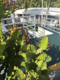 El Patio Motel, Key West, FL, United States Overview ...