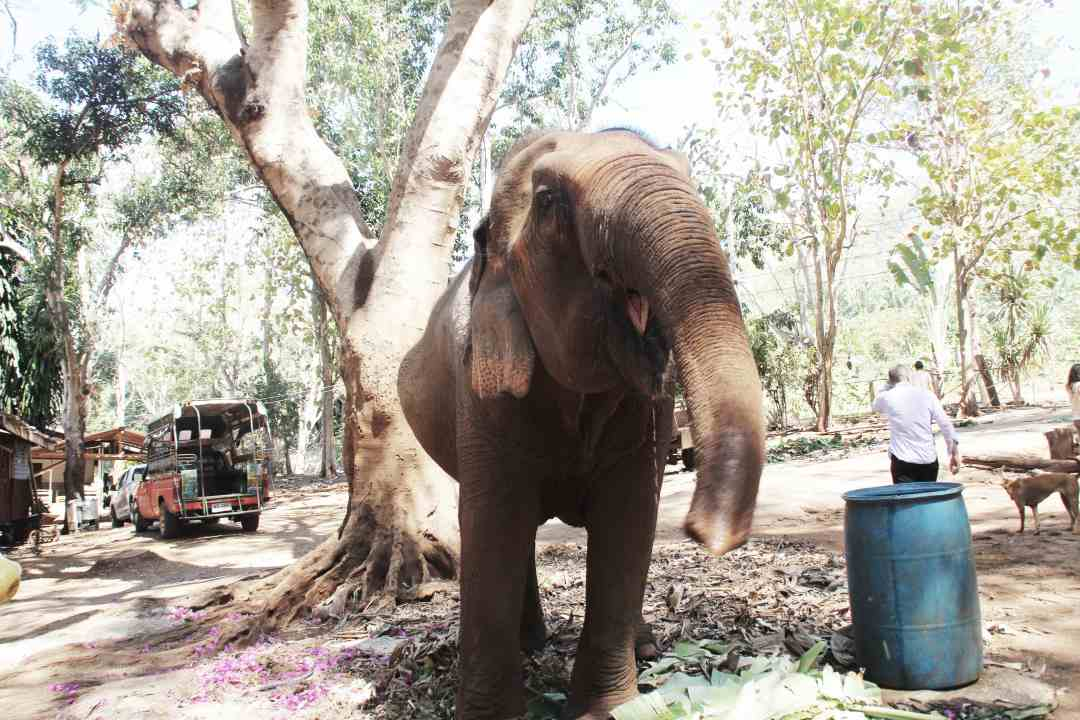 Photo d'un éléphant en train de manger #elephant #thailande