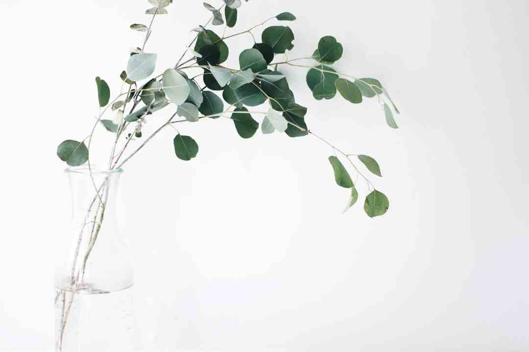 Photo d'eucalyptus dans un vase