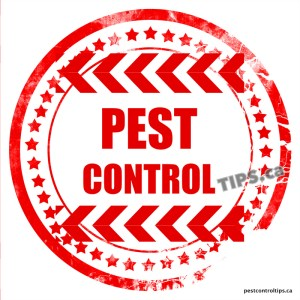 PEST CONTROL TIPS - Nuisance Animal Control, Wildlife Control, Rodent Control