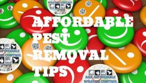 Affordable Pest Removal, Affordable Wildlife Control & Pest Removal Tips, AAA AFFORDABLE WILDLIFE CONTROL