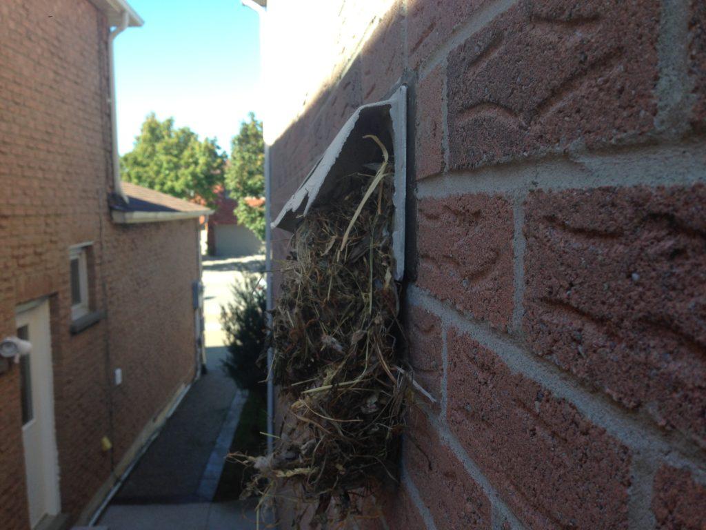 Bird Nest Removal Toronto - Bird Nest Removal Toronto