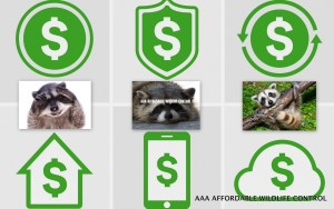 Wildlife Control Toronto Cost, First-Rate Raccoon Removal Cost. Reasonable Squirrel Removal Cost In Toronto