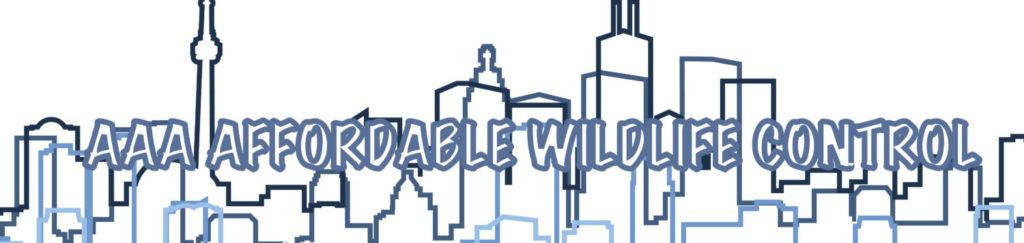 Wildlife Control Toronto - Animal Removal Toronto